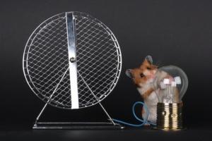 Clean Energy Hamster
