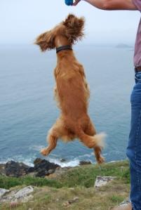 Rufus jumping